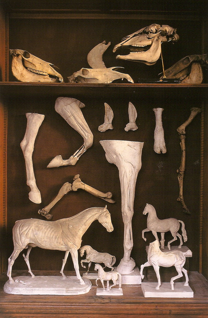 Collection of various horse anotomical constructions and skulls. Galerie Huguier, École des Beaux-Arts, Paris.