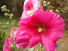 20090522203556(HTC - HTC Touch HD T8282)
