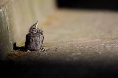 leave the nest (The Corrections) Tags: bird nest marcozocchi lasciareilnido