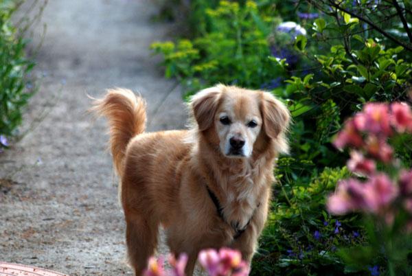 Canis sammiepantus