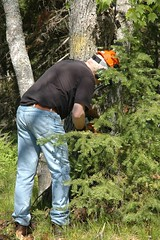 maple - 02 (D o w i e) Tags: mi michigan chainsaw firewood stihl stihlchainsaw