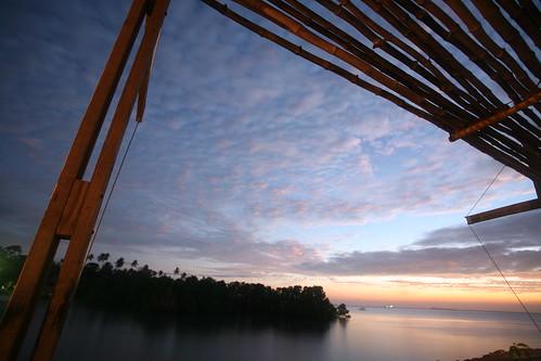 mangrove, framed