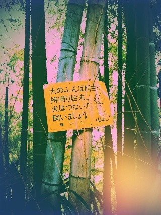 竹やぶの中の黄色い看板。良い黄色加減で目が止まる。