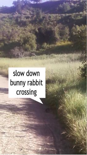 Bugs Bunny Crossing