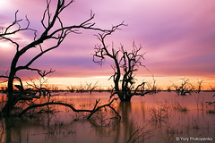 Sunset at Menindee Lakes, Outback NSW, Australia (-yury-) Tags: sunset sky tree water clouds lakes australia nsw outback darlingriver menindee pamamaroo brokoenhill