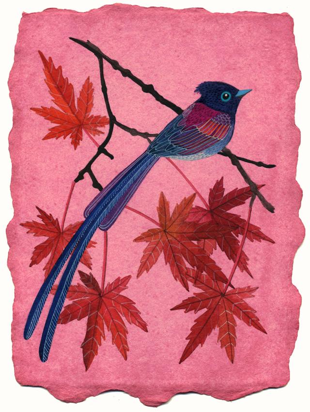Japanese paradise flycatcher