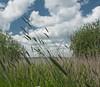 tickling (ceesjwfoto (Cees Wouda)) Tags: sky lake holland netherlands clouds spring europe springtime uitdam