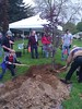 Volunteers planting the tree