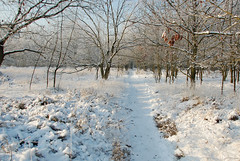 Winter (~~Nelly~~) Tags: winter snow belgium belgique hiver sneeuw belgi neige kesselseheide