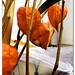 aguaymanto, alquequenje peruano, capulí, poga poga, tomate silvestre, tomatillo, uchuva o uvilla, (Physalis peruviana L.)