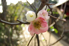 FishEyeで撮る身の回りの春