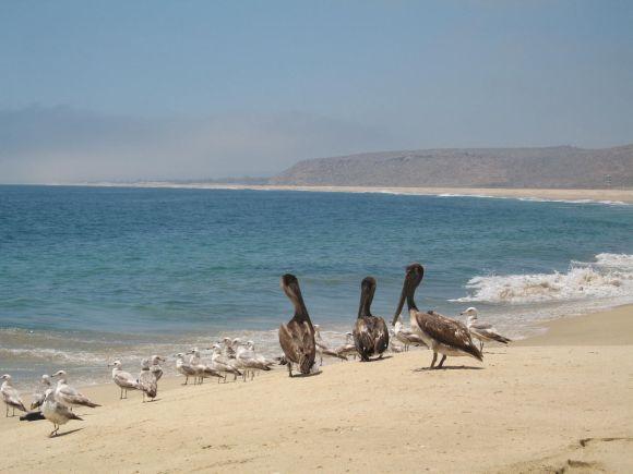 Baja Boys and Gulls