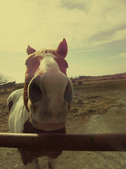 Patches (Ashuhlee Switzerland.) Tags: life sky horse barn fence outside nose paint farm lot human sniff stable patches
