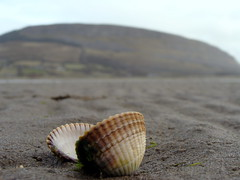 Shell under Knocknarea (Sarah K Mc) Tags: ireland mountain beach sony shell sligo knocknarea strandhill culleenamore dsch3 sonydsch3