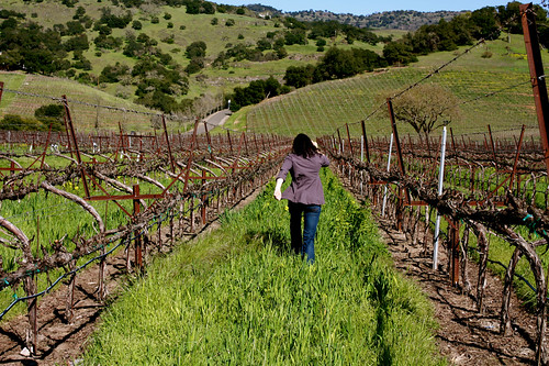 What Do You Do with Five Hours in Wine Country?