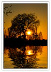 weeping willow (Lars Kehrel) Tags: light sunset red orange sun lake reflection tree rot water k yellow night reflections river see evening abend licht back weide wasser sonnenuntergang sundown flood pentax d down lars gelb willow 200 fluss sonne weeping baum backlighting reflektion afterglow gegenlicht trauer abends reflektionen trauerweide 200d k200 abendrte k200d kehrel