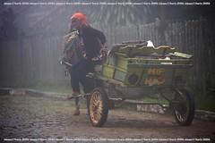 Hip Hop (Johanes Duarte 2013) Tags: horse fog wagon y neblina cavalo carroça paranapiacabasp