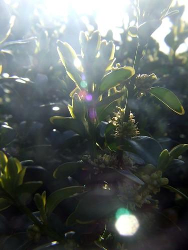 garden 038