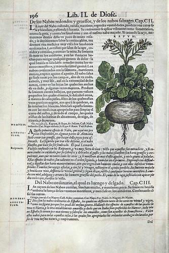 013-De los nabos- Pedacio Dioscorides Anazarbeo 1555