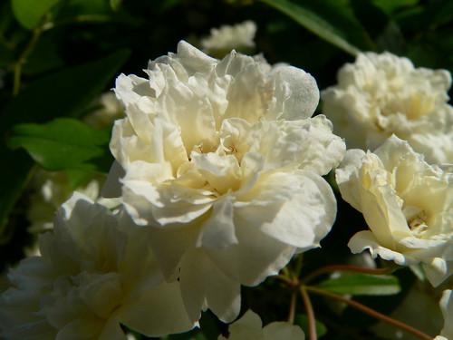 Der goldene Touch auf der Blüte