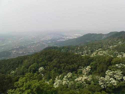雙峰山上遠眺油桐花