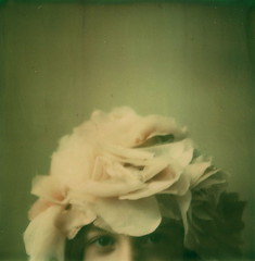 may is for roses (girlhula) Tags: polaroid sx70 plus soon icantwait notsure howifeel thathat itsofficial arestarting theroses tobloom artistictz butidolove roidweek2009 hereinportland ourfrontproch willbecovered withblooms oooohhhhhhh aboutthisfilm