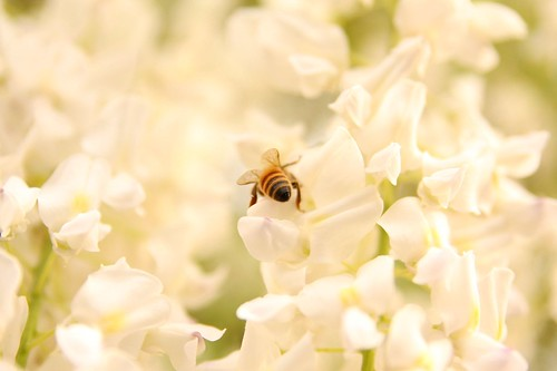 flower and bee 02
