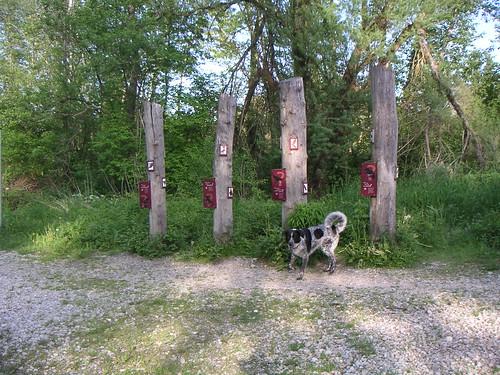 Die Vogelpfähle sind nicht nur für Mika interessant: Hier kann man einiges über die lokale Vogelwelt erfahren