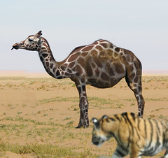 Stalking strange prey (Gravityx9) Tags: photoshop tiger camel chop giraffe psc amer 0509 sxc woow bechster sumeja 100creaciones modernimpressionists mwqio 051709