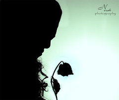 .. (     ) Tags: black flower rose norah reem silhouett