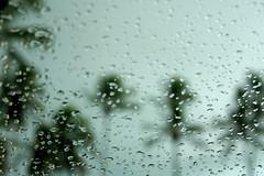 Não faz assim, não vá pra lá, meu coração vai se entregar à tempestade... (Fabiana Velôso) Tags: praia água vidro saudade chuva gotas carro nublado tempo vento coqueiros dentrodocarro tempestade frenteafrente fabianavelôso
