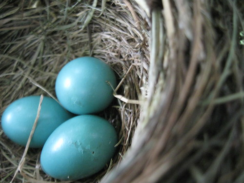 the latest on the robins' eggs