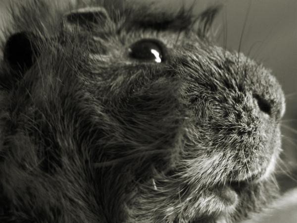 Kuzco closeup in black and white