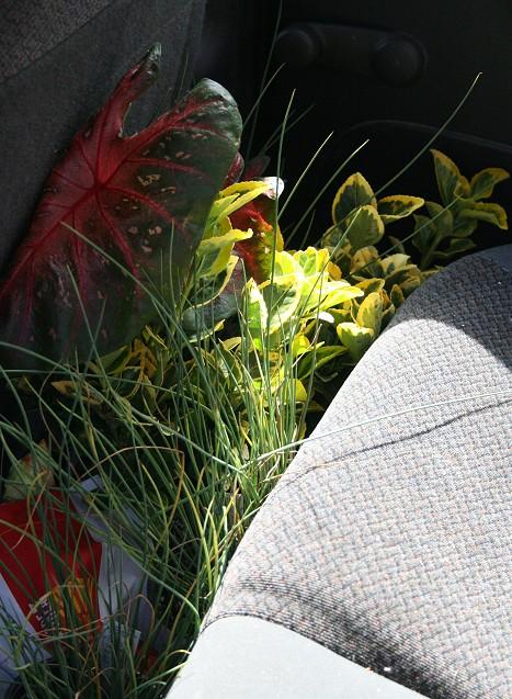 06-16-neonplants