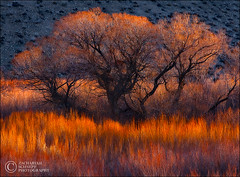 Burning Softly (Zack Schnepf) Tags: california winter tree beautiful sunrise landscape fire bravo flames sierras owensvalley firstlight
