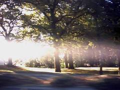 Harper Ave (Ice Nine) Tags: god now harperave notractorhere nowmovealongplease inc130