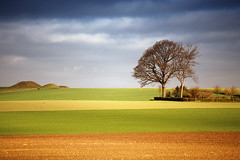 Norrvidinge Landscape (Rutger Blom) Tags: sky brown tree green nature public yellow landscape countryside skne europa europe groen sweden natur skandinavien natuur himmel boom hills sverige agriculture lucht scandinavia geel hilly gul trd brun scania landschap bruin zweden landet ker landskap kullar grn platteland cropland skane heuvels akker landsbygd jordbruk ef70200mmf4lusm ourplanet treesubject canoneos5dmarkii glooiend skanelan norrvidinge kuperad