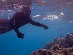 Coral spawning observations, French Frigate Shoals (USFWS Pacific) Tags: coralreef sharkisland coralspawning cauliflowercoral frenchfrigateshoals northwesternhawaiianislands hawaiianislandsnationalwildliferefuge pocilloporameandrina kanemilohai papahanaumokuakeamarinenationalmonument