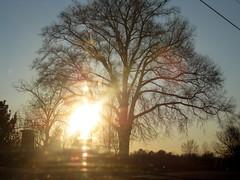 13/365 - Favorite Tree