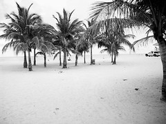 beach. (Isabel Elite) Tags: blue trees people tree green beach birds sand police palm elite isabel