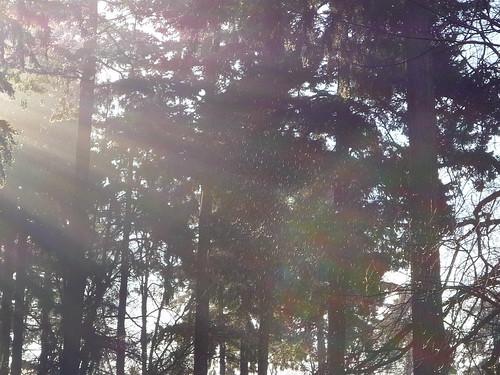 fograin sunshine