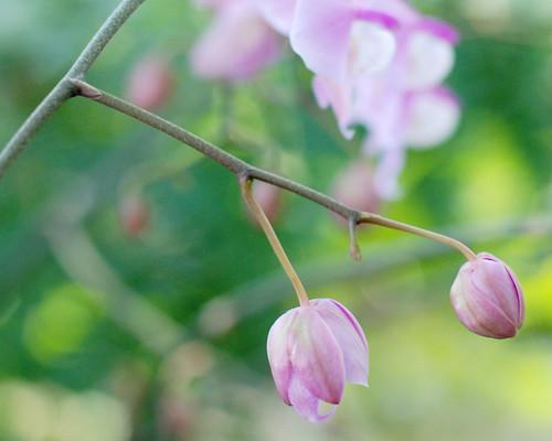 v botanical gardens 014