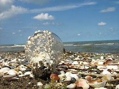 sEa aNd BuLb (<T-Y>) Tags: light sea fab sky beach nature water bulb reflex iran horizon north shell snail clam mazandaran ammonite whelk haraz wheal  shelfish