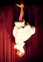 Mother Goose (Andy Field (Field Office)) Tags: wads panto mothergoose whittlesford