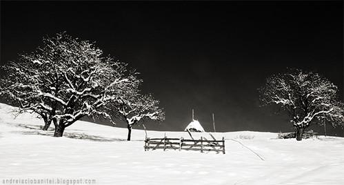 despre alb ca zapada (XI)