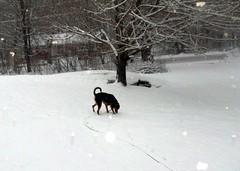 Teutul_snow_30909b
