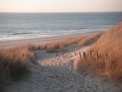 Lonely runner (Yasti) Tags: sea holland beach netherlands evening spring runner northsee