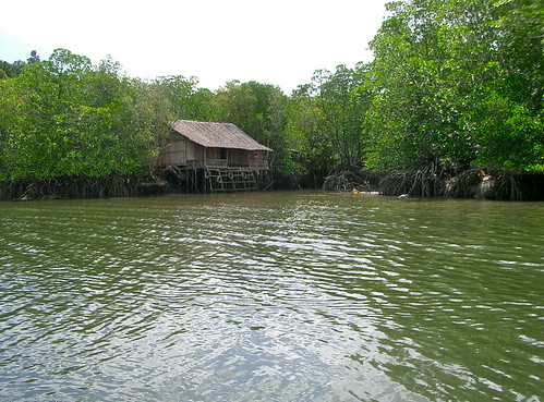 Mangrove Forest, Bintan Island, Indonesia