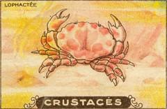 crustacés 12