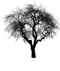 Tree Brush 2 (Feodora Umarov) Tags: silhouette brush photoshopbrush treebrush